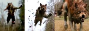 Werewolf rp New-moon-werewolf-transformation-300x105